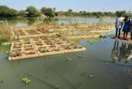 Tulsi and ashvagandha to purify Hyderabad lake