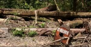 madeirailegal-300x156