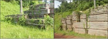 Prefeitura-permite-que-mato-tome-conta-da-madeira-que-poderia-ser-usada-na-construção-de-pontes-e-passarelas-no-Município