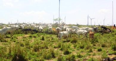 deflagrada em 2009, a Operação Boi Pirata II retirou fazendas ilegais de dentro da Floresta nacional do Jamanxim. Cinco anos depois, unidade de conservação ainda sofre com desmatamento e invasões de terra. Foto: Nelson Feitosa/Ascom Ibama.