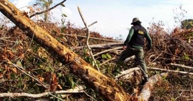 Área desmatada na região de Mato Grosso, localizada por agentes do Ibama em agosto deste ano (Foto: Hebert Rondon/Ibama)