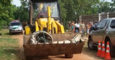 Animal sendo transportado para o quartel da PM de Calçoene (Foto: Reprodução/TV Amapá)