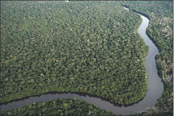 Asimas-acusa-Greenpeace-de-trabalhar-para-grupos-internacionais-que-estão-de-olho-na-Amazônia