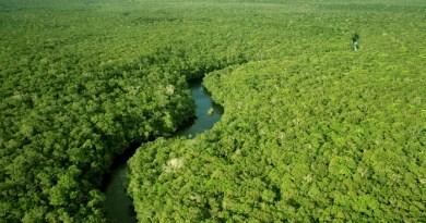 amazonia_o_maior_patrimonio_do_pais_em_biodversidade