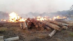 Madeira-em-tora-pegando-fogo-em-Prainha-300x169
