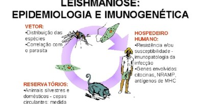 leishmaniose