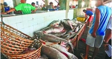 Espécies-de-pescado-ameaçadas-são-fiscalizadas