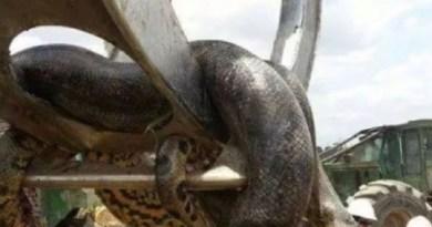 anacondaa