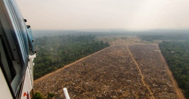 Helicóptero do IBAMA sobrevoa área desmatada ilegalmente. Fotos: Marcio Isensee e Sá