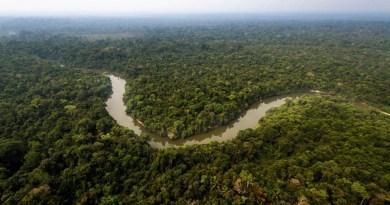 A Terra Indígena Mekrãgnoti, banhada pelo rio Curuá, ocupa 5 milhões de hectares de florestas preservadas.