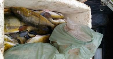 peixe-piracema