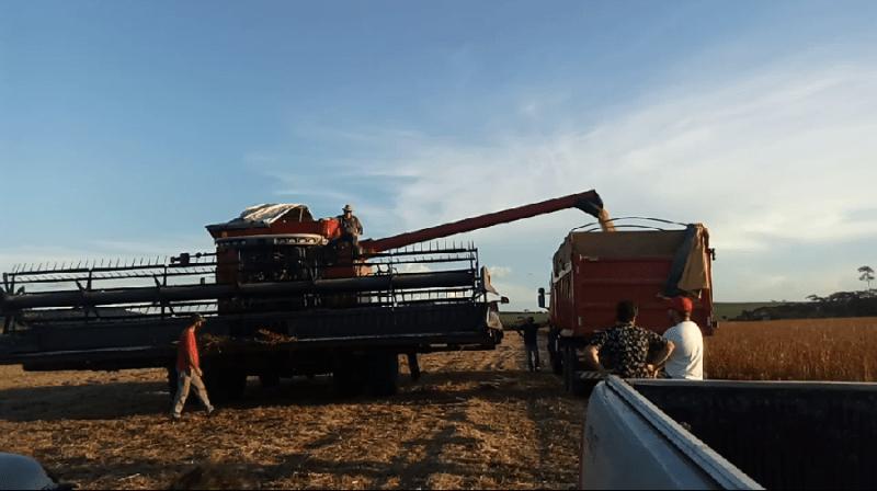 Colheita Fazenda João Piran em Novo Progresso (Foto jornal Folha do Progresso)