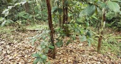 florestabbc