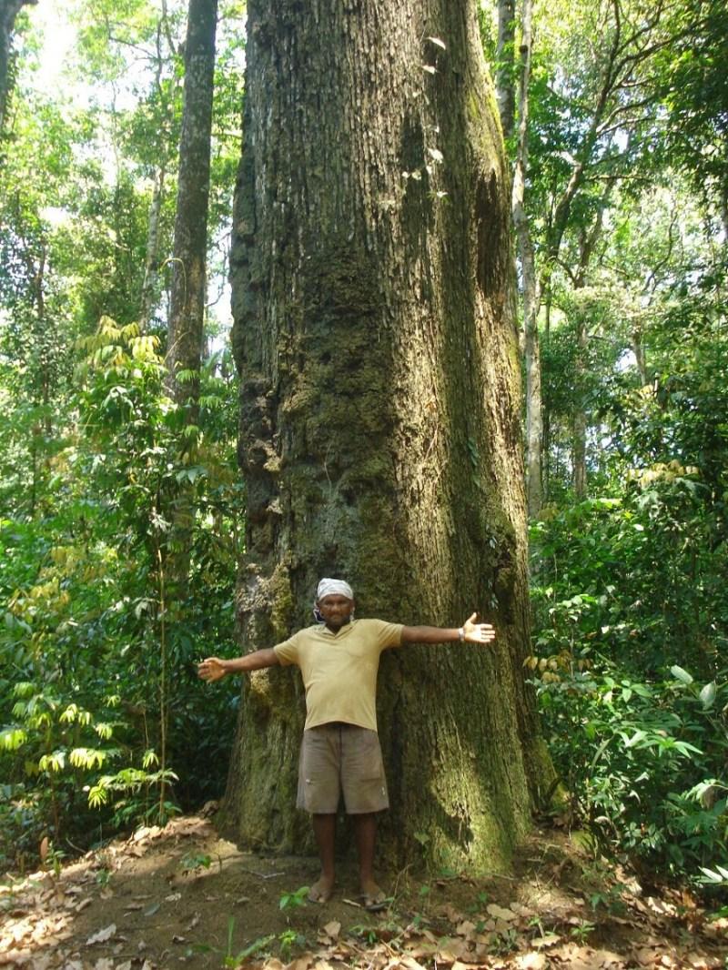 Gervásio Oliveira, liderança de Ariramba. Quilombolas fazem uso sustentável da floresta