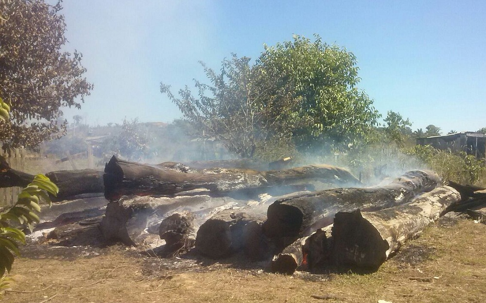 Madeira doada pelo Ibama é incendiada em Novo Progresso