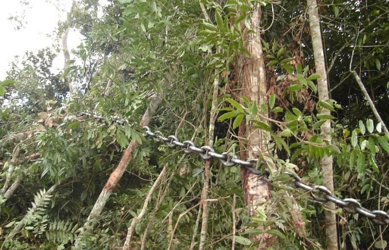 Correntão em ação em floresta do Mato Grosso. Imagem: GC Notícias.