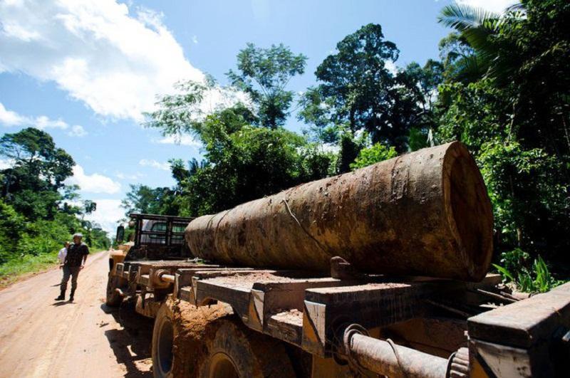 Madeira Ilegal     As florestas públicas são alvos fáceis para grileiros e madeireiros (Marcelo Camargo/Agência Brasil)