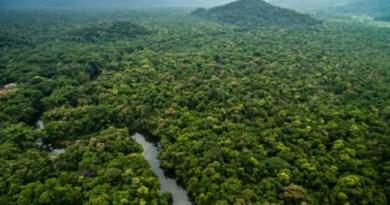 Amazonia-450x337