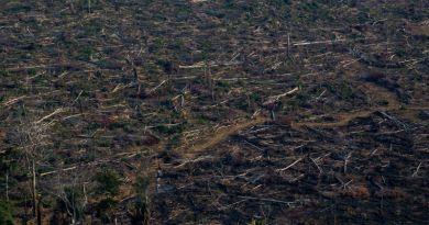 O fogo é usado tradicionalmente na Amazônia como uma técnica barata para abrir pastos para o gado ou mesmo áreas de pequenos cultivos.