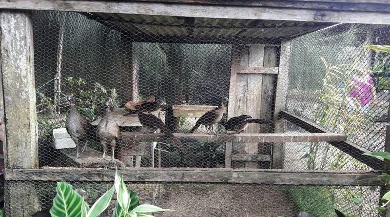 pc-animais-silvestres