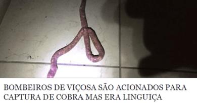 vicosa