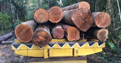 destaque-517085-madeira
