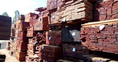 madeira sp