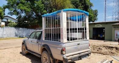 caminhonete-com-jaula