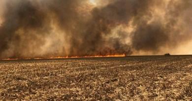 Fogo atinge fazendas e destrói cerca de 10 mil hectares de lavouras de milho em MT