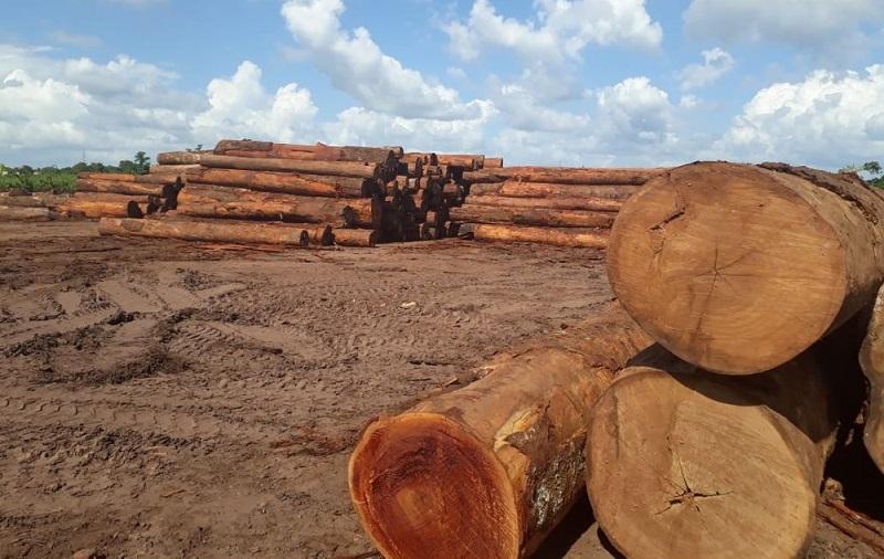 A madeira apreendida equivale a 654 caminhões carregados, segundo a Semas. (Foto: Reprodução / Semas)