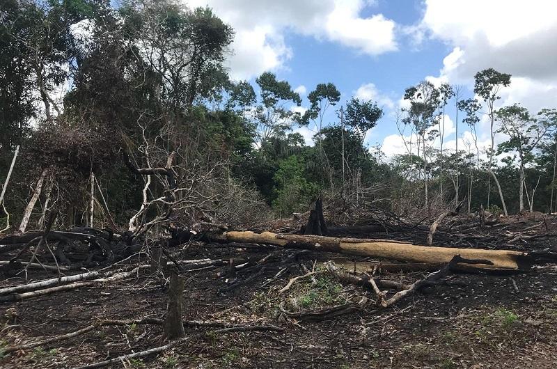 Desmatamento na comuidade Ariri, em Macapá — Foto: Dema/Divulgação