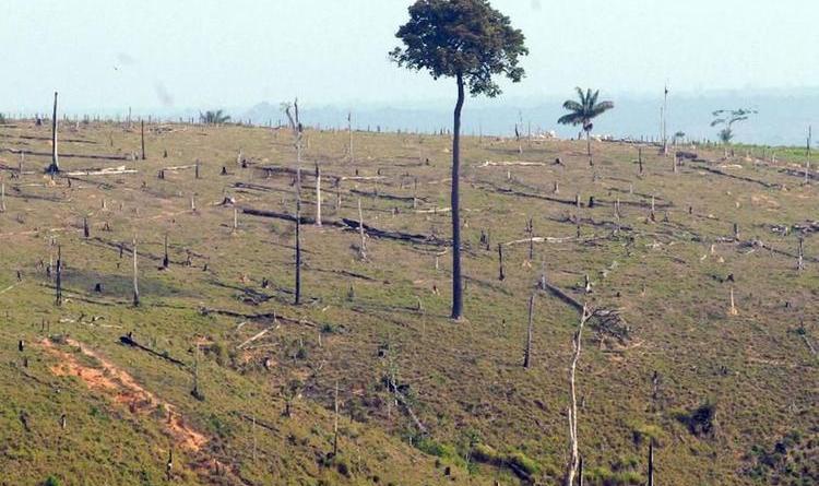 desmatamento-da-amazonia