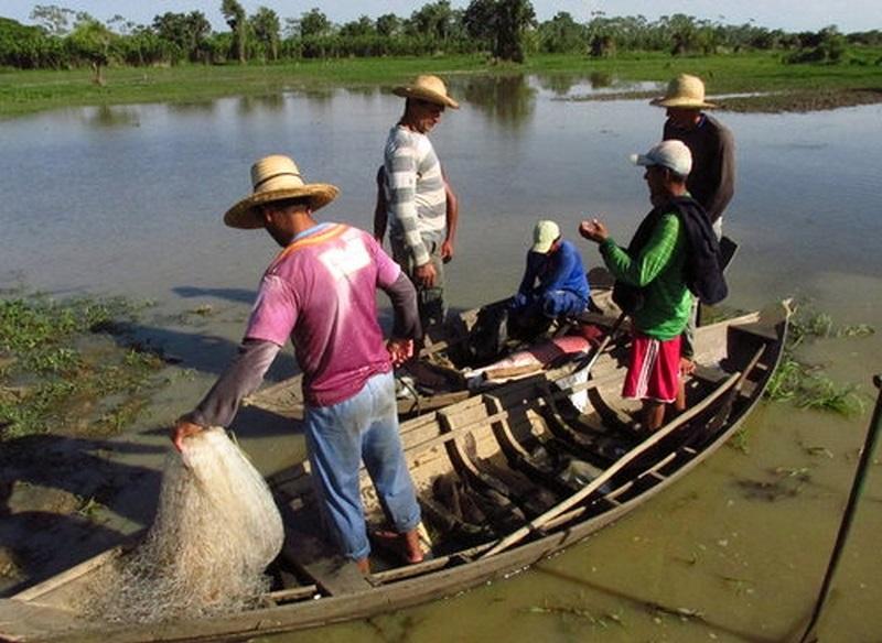 Pixuna do Tapará é a segunda maior comunidade com quantidade de pirarucus na região do Baixo Amazonas — Foto: Sapopema/Divulgação