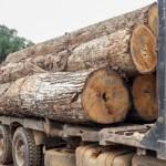Operação do Ibama fecha quatro serrarias no município de Novo Progresso (PA).