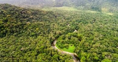 Justiça condena fazendeiro a reparar e indenizar desmatamento de área da Amazônia Legal