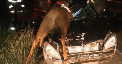Idosa morre após carro atropelar cavalo na BR-153, em Rialma