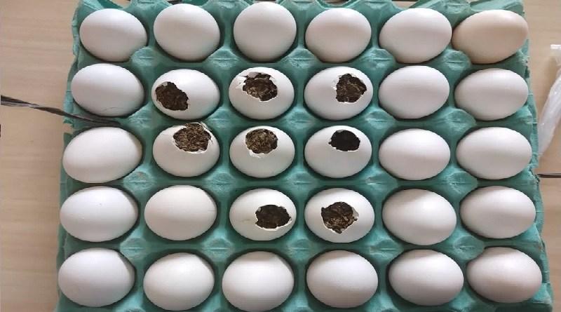ovos maconha