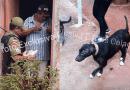 Homem é detido sob suspeitas de abuso sexual contra cadela em Altamira, PA