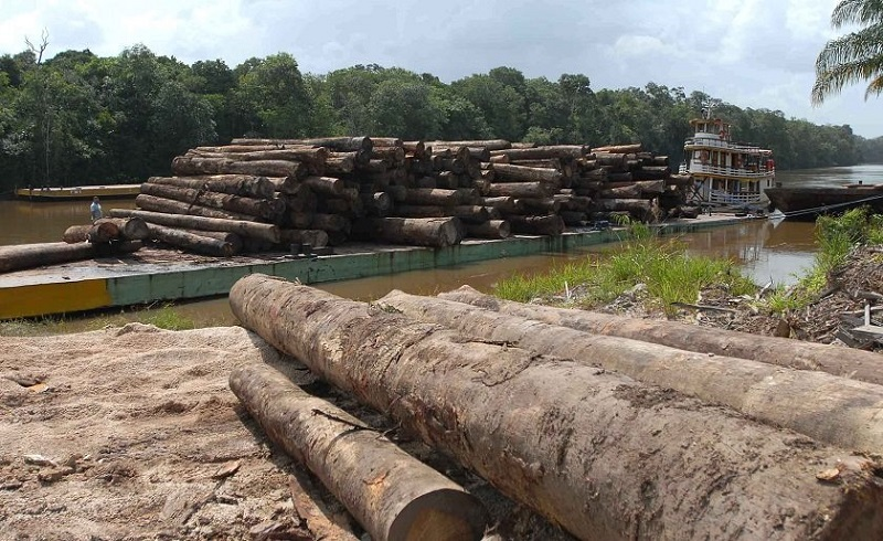 Dentre as espécies desmatadas encontravam-se Ipês, Cedros, Maçarandubas, Aroeiras e Jacarandás, dentre outras. No mercado, o valor das madeiras envolvidas na fraude poderia chegar a quase R$ 80 milhões.(Foto:PF)