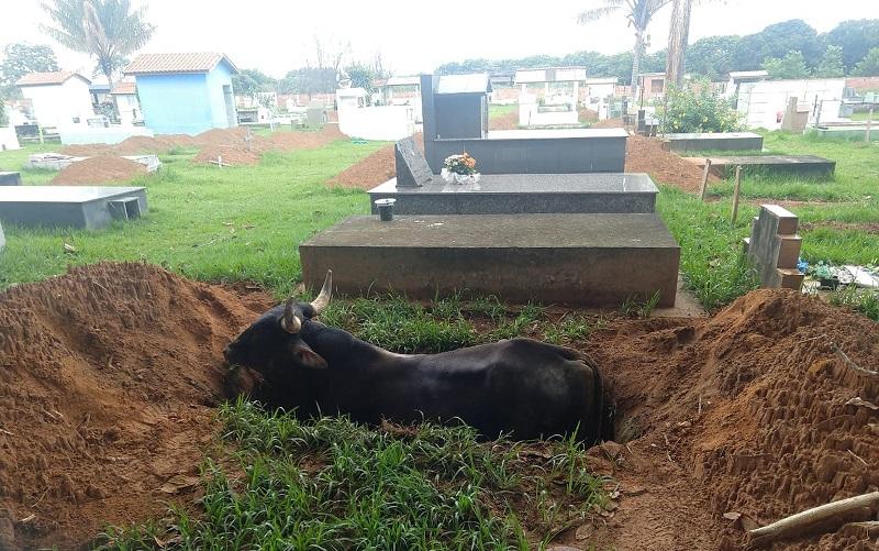 Animal foi resgatado pelo proprietário e por funcionários do cemitério em Juína (MT) — Foto: Reprodução