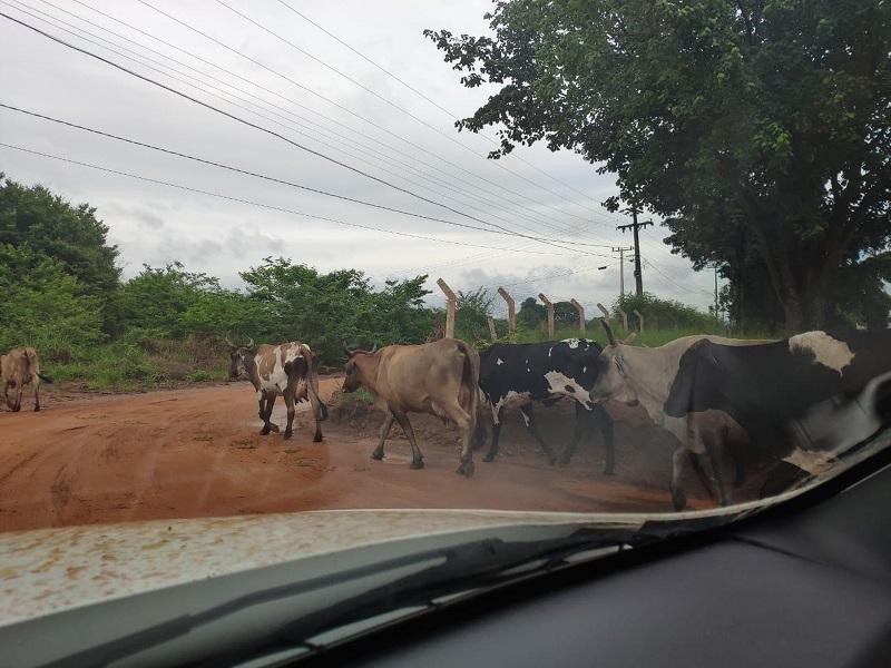 Moradores informaram que circulação de animais na região do cemitério é constante — Foto: Luiz Pereira/ IFMT