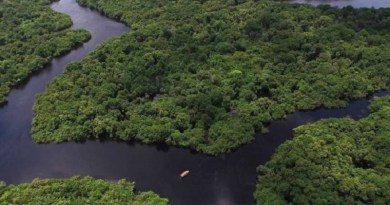 floresta_amazonica-8696707
