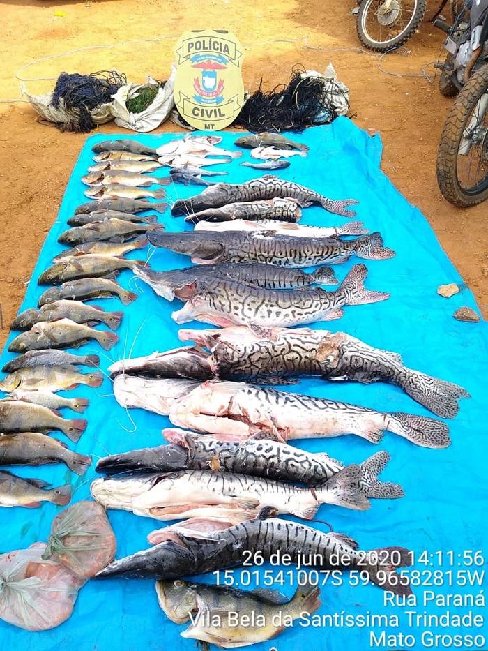 200 kg de pescado apreendido — Foto: Polícia Civil de Mato Grosso/Assessoria