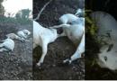 Queda de raio mata mais de 20 cabeças de gado em vicinal de Itaituba
