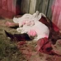 Adolescente mata padrasto com canivete para defender a mãe em Santarém