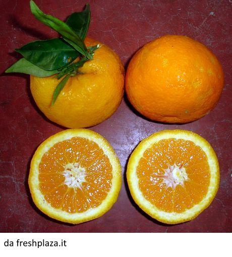arancia_staccia