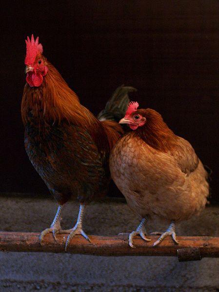 Ciò che bisogna sapere sulle uova