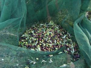 olive-e-rete