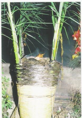 La panara con i quattro rami di palma ben fissati