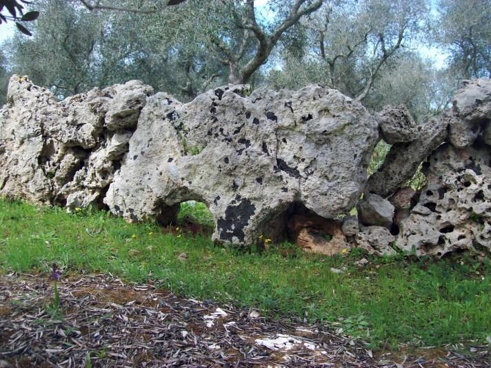 pietra zoomorfa (foto marco cavalera)